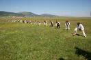 Kosidba Kupres (Kupres days)